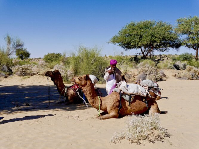 camel safari in jaislamer